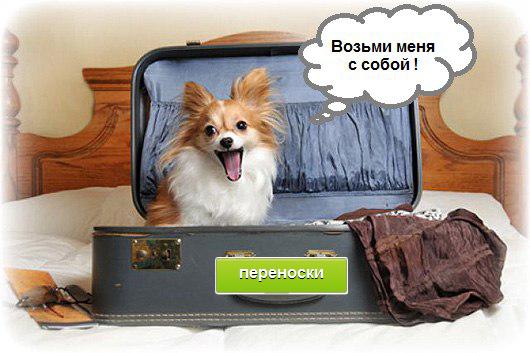 Одежда для собак интернет магазин. Дешево купить одежду для собак в ... 430436e4bd7